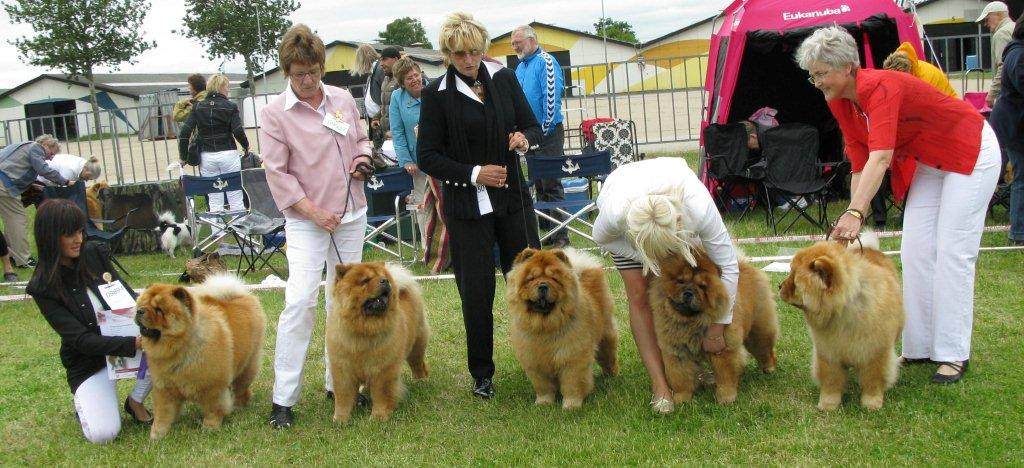 Chan-Lo´s breeder group (CH Stagebo´s Quick Step x Stagebo´s Touch Of Class)